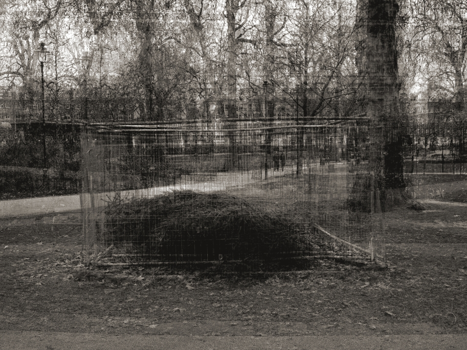 03_Caged_Tree_100cm_x_75cm_c-type_2009